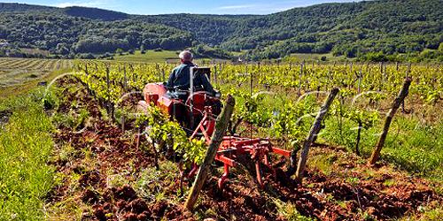Alain Labet che ara le vigne