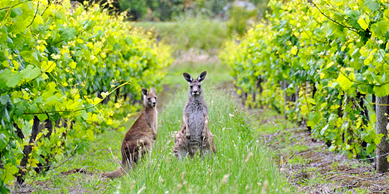 Wyndham-Estate-Australia