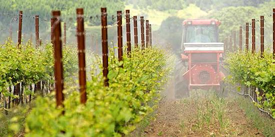 pesticidi-vino-altroconsumo-legambiente