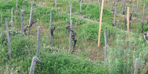 Etna, Src vigne
