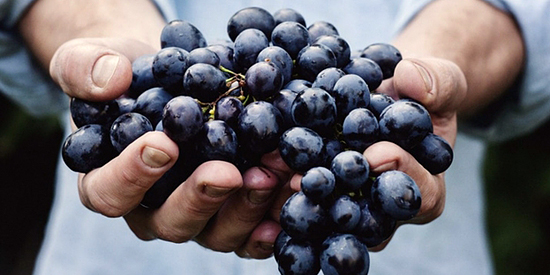 01_vino-naturale-biologico-biodinamico