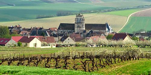 GOISOT_Côtes d'Auxerre Rouge_Pinot Noir