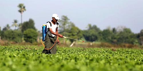 pesticida-rame